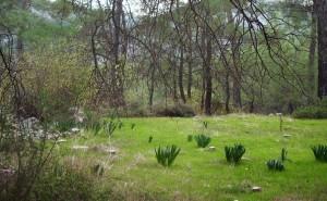 Ulupınar Wiese im Wald